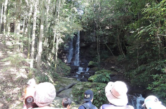 悠久の森で2つの顔が見える滝を発見